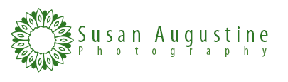 Susan Augustine Photography