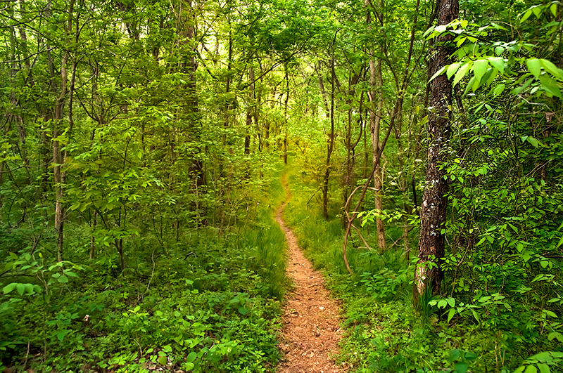 Hike the nearby Mark Twain National Forest.