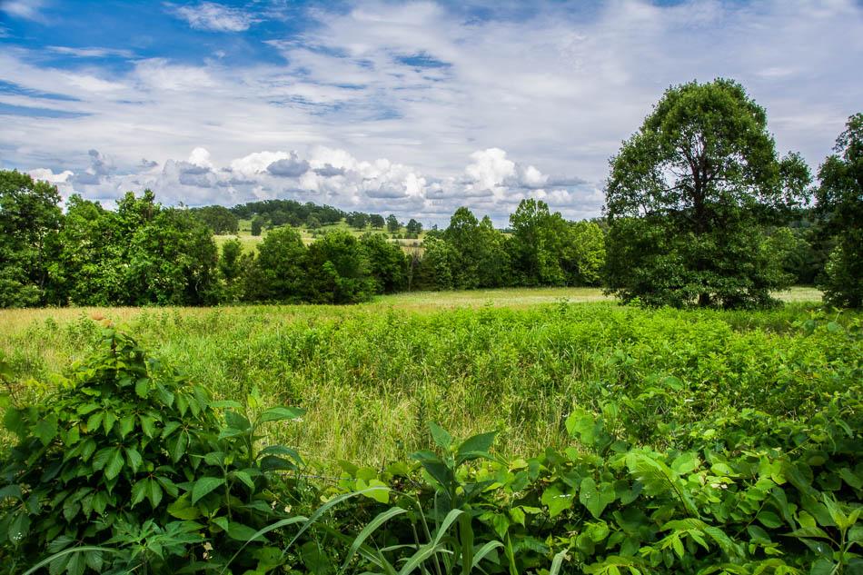 Theodosia, MO 40 acres for sale