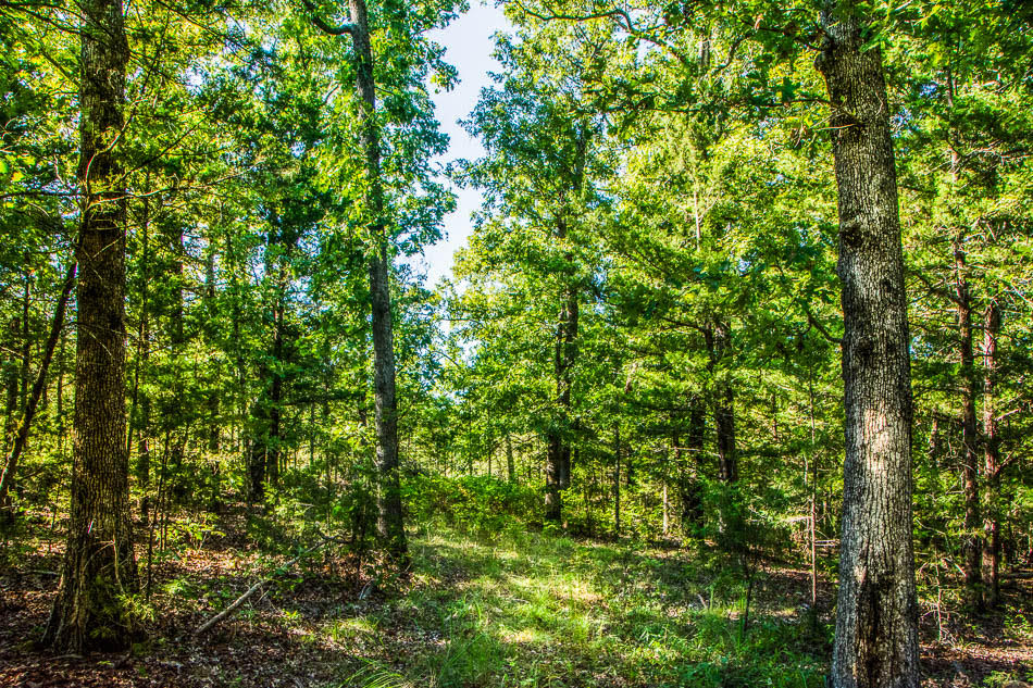 45 Wooded Country Acres near Gainesville, MO 1