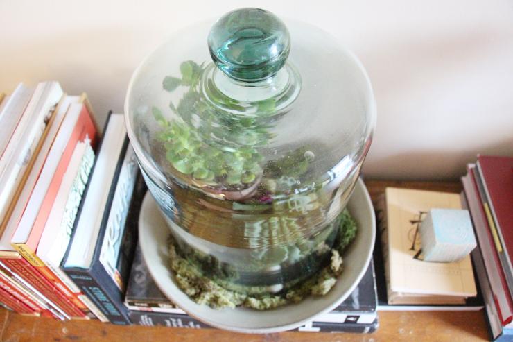 DT-Bell-Jar.jpg