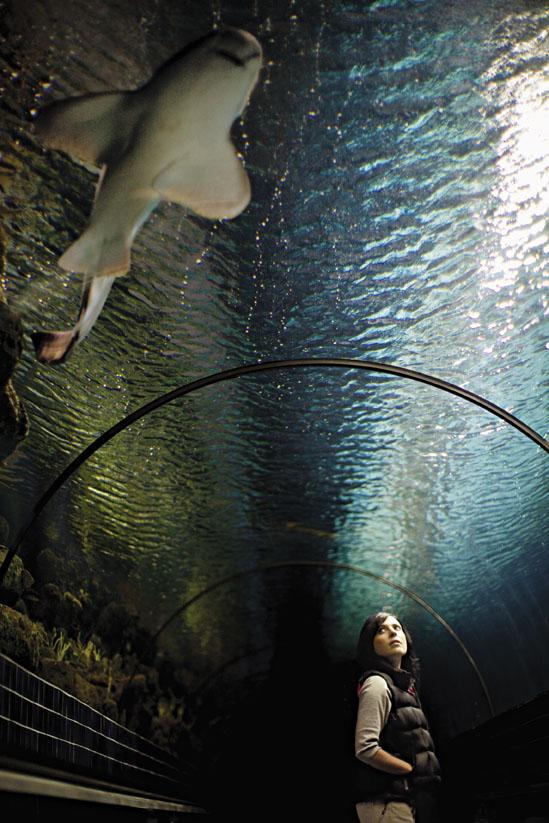 KU08_Aquarium_Dara.jpg