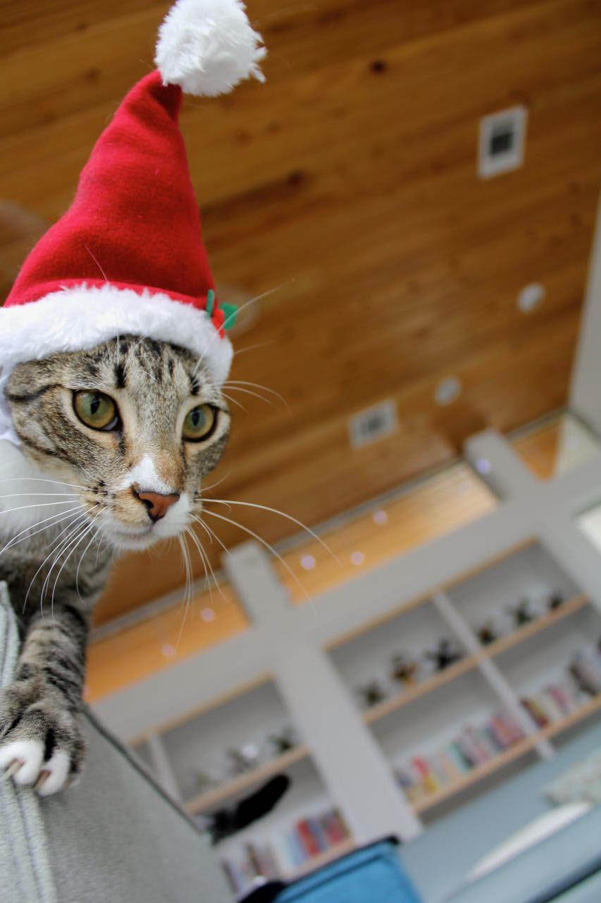 Mace Cat.jpg