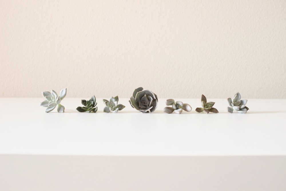 Hello Lovely Plant Lady | Succulent Cuttings