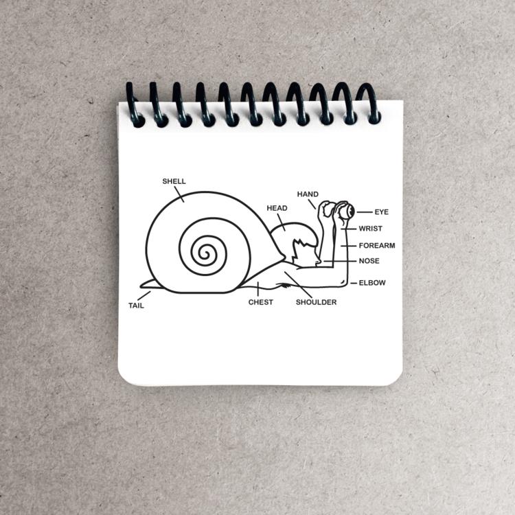 Crux web snail notepads png