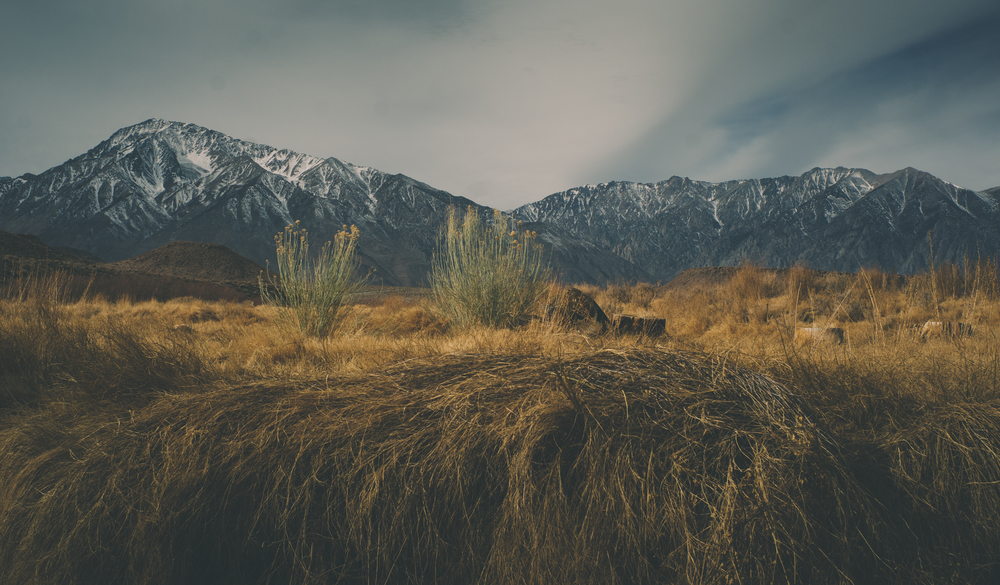 MountainsRabbitBrush_FujiSuperia1600.jpg