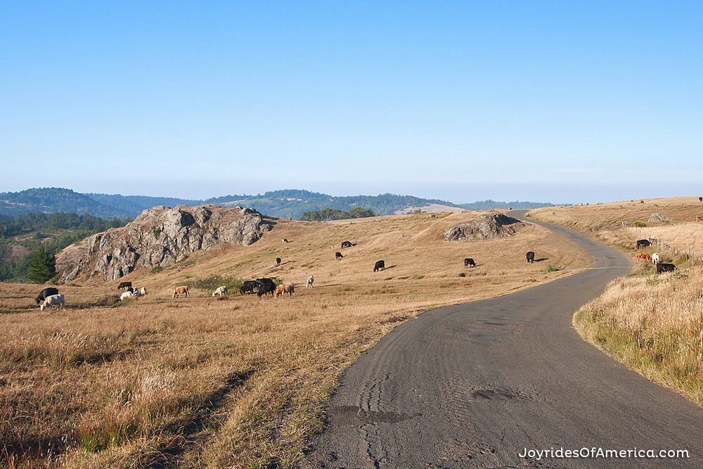 FREESTONE + COLEMAN VALLEY RD.  January 22, 2014  »» VIEW THIS ISSUE »