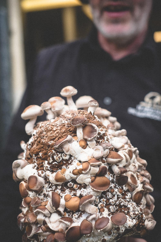 mushrooms-3.jpg