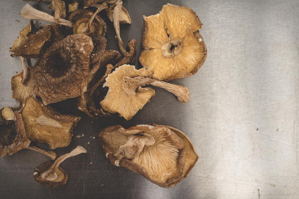 mushrooms-42.jpg