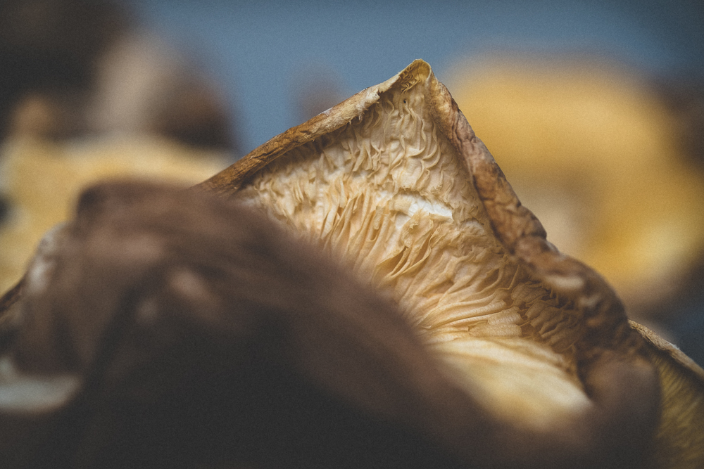 mushrooms-47.jpg