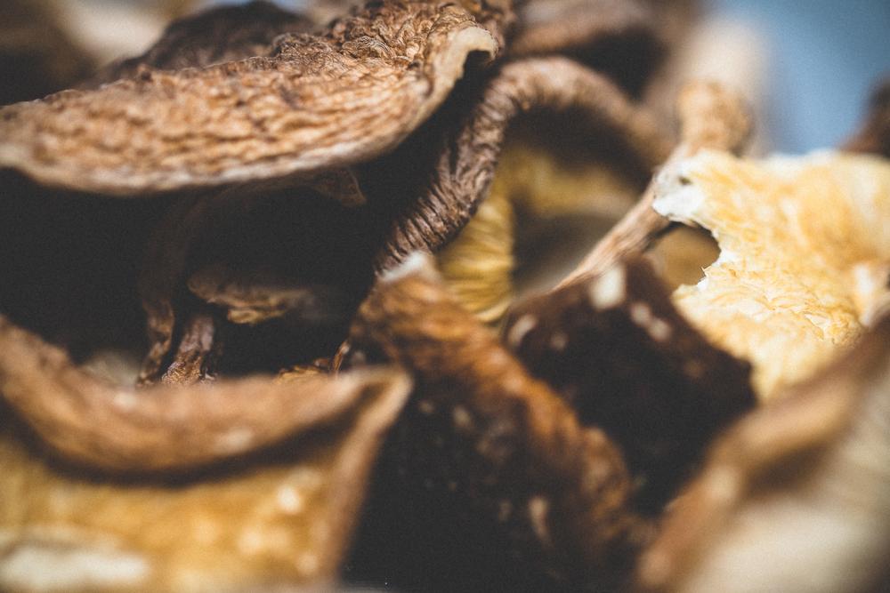 mushrooms-49.jpg