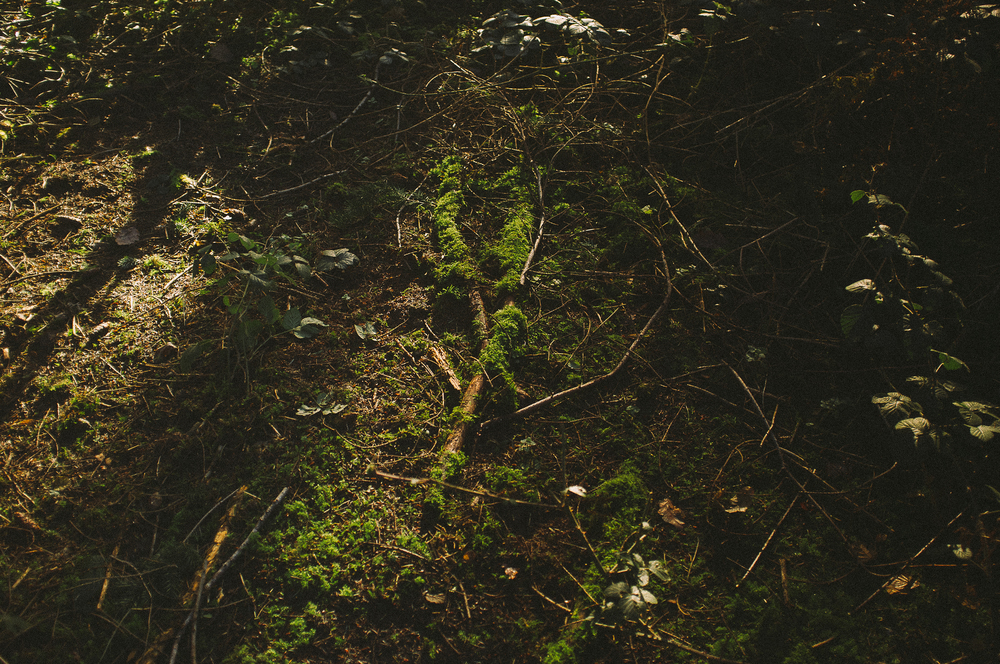 fuji x100 woods-1-3.jpg