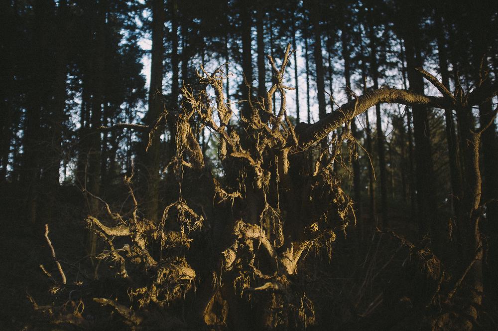 fuji x100 woods-1-4.jpg