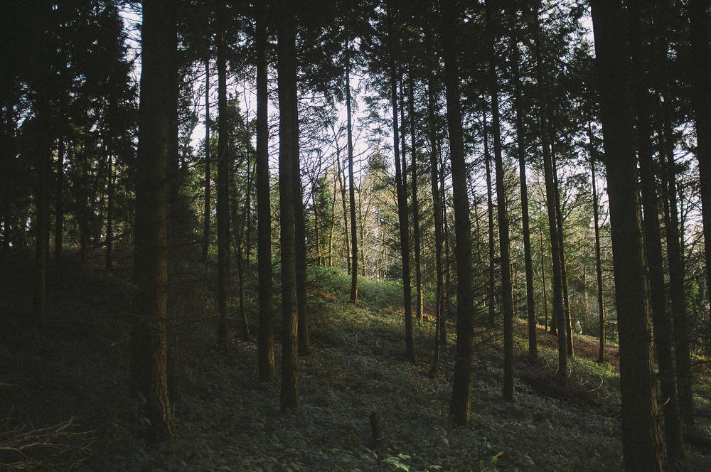 fuji x100 woods-1-6.jpg