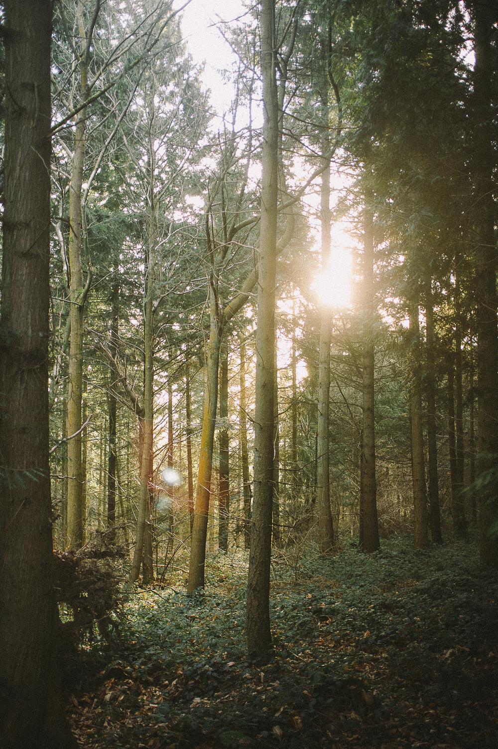 fuji x100 woods-1-7.jpg