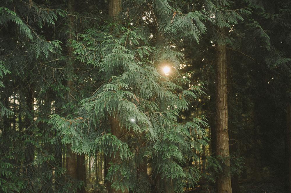 fuji x100 woods-1-8.jpg