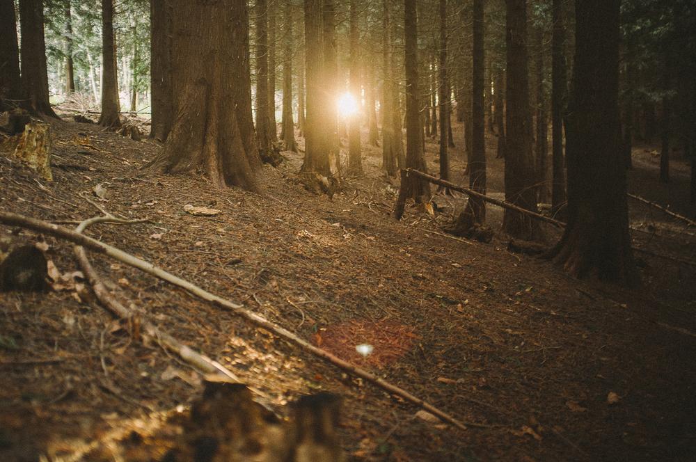 fuji x100 woods-1-14.jpg
