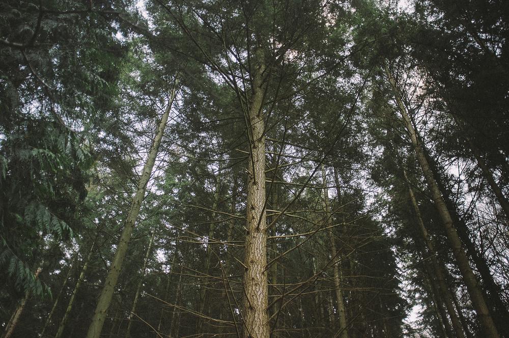 fuji x100 woods-1-16.jpg
