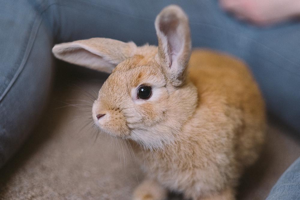 bunny-1-3.jpg