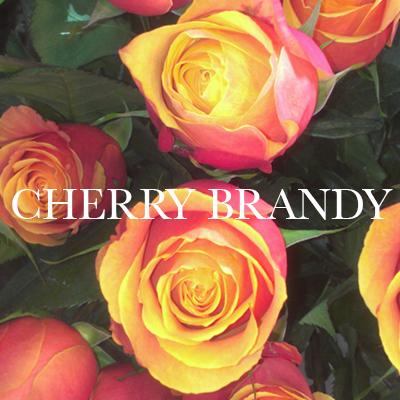 CHERRYBRANDY.jpg