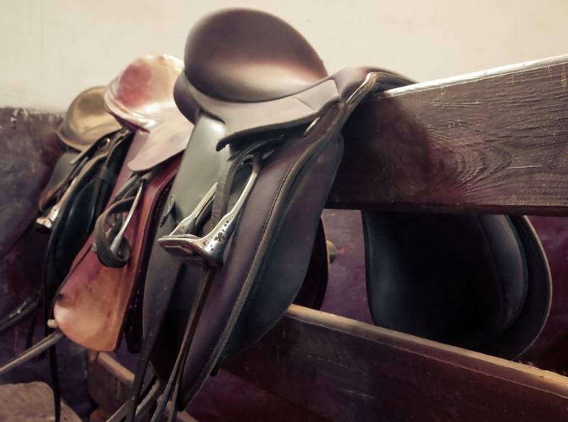 Equine & Bloodstock
