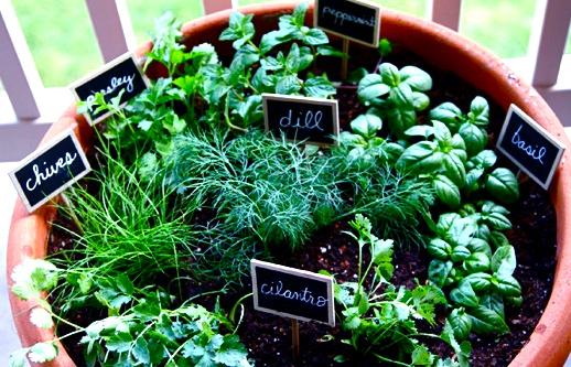 herbs_525.jpg