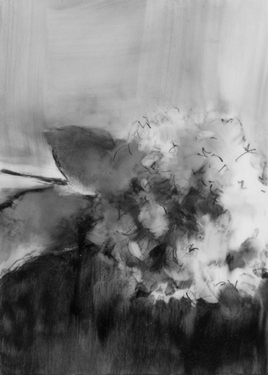 02-Hydrangea1.jpg