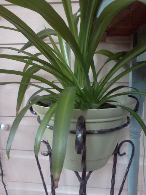 10 air purifying house plants : wholehearter