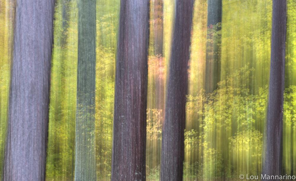 20121002_Mannarino_0228.jpg
