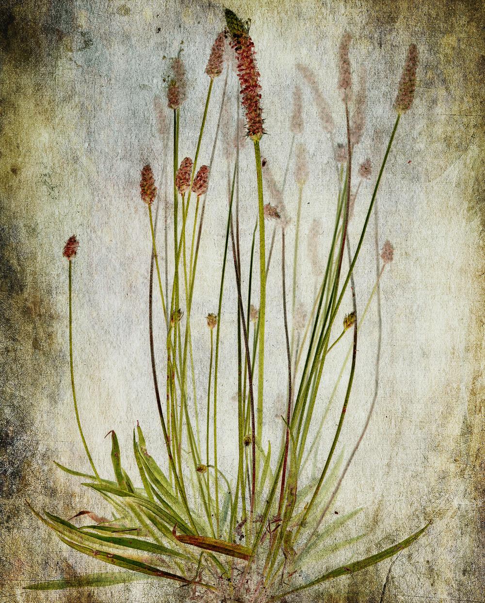 Flower0025c.jpg