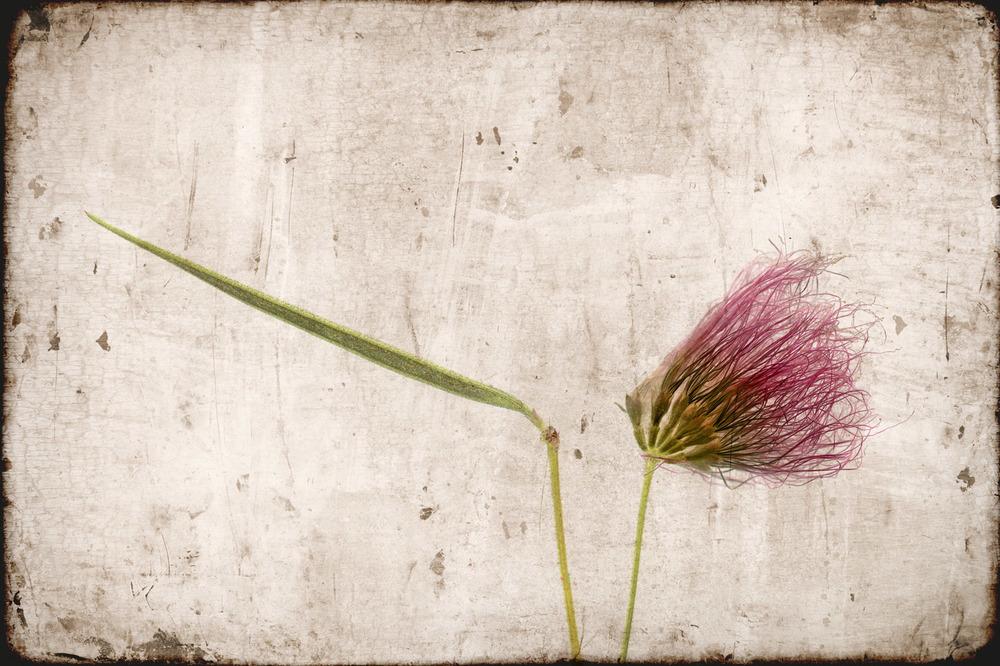 Flower0056d.jpg