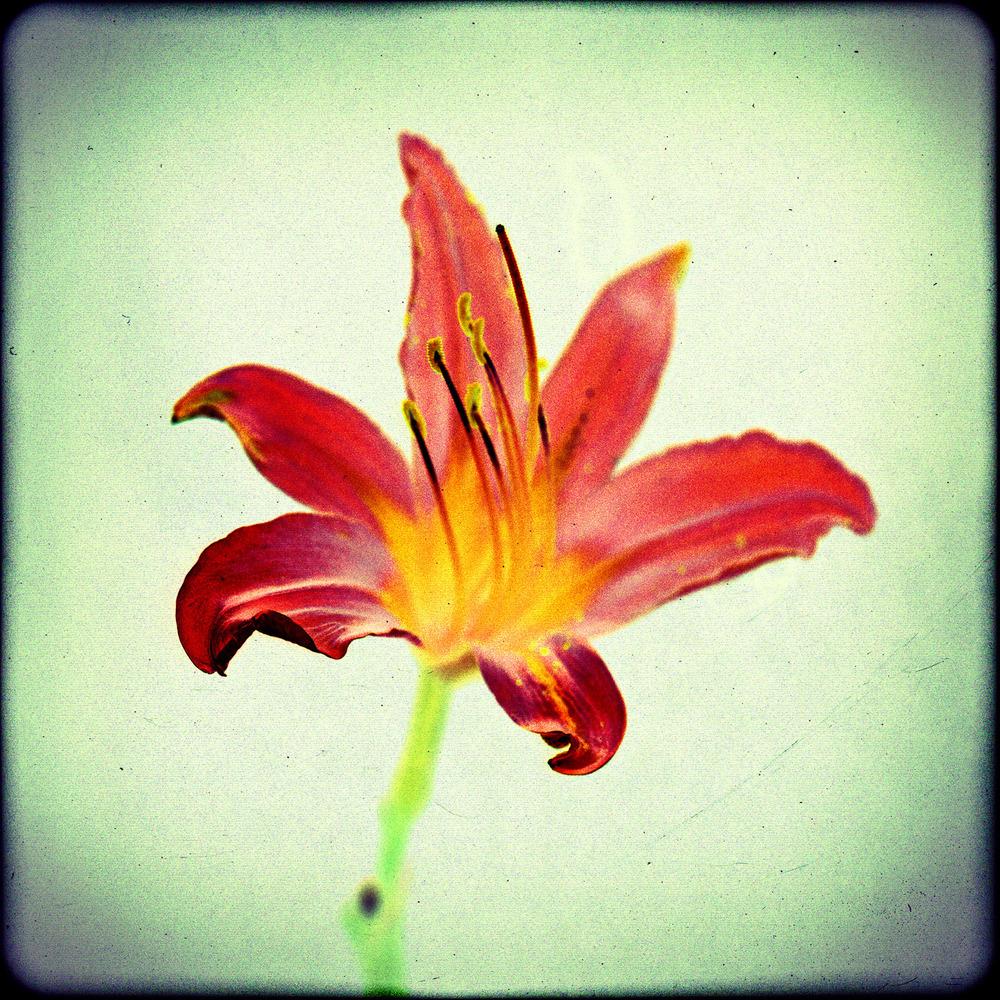 Flower0038c.jpg