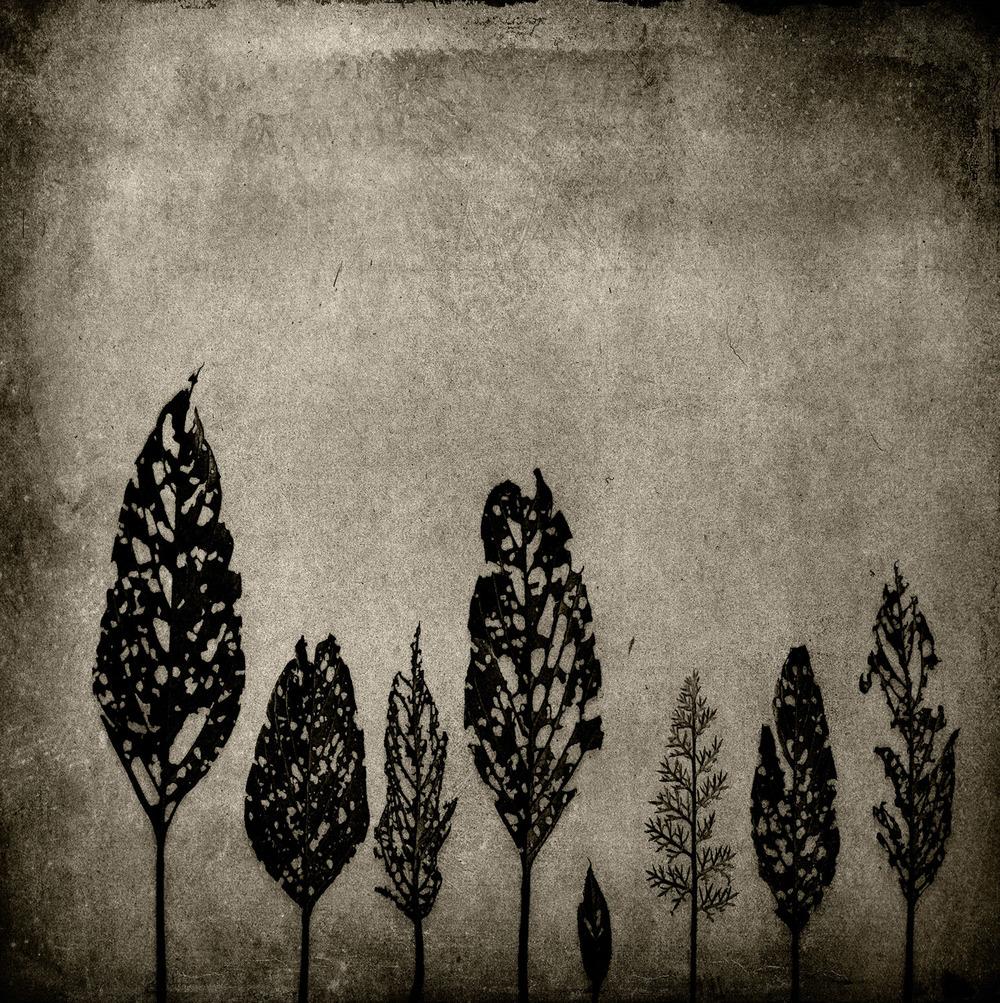 Flower0068e.jpg