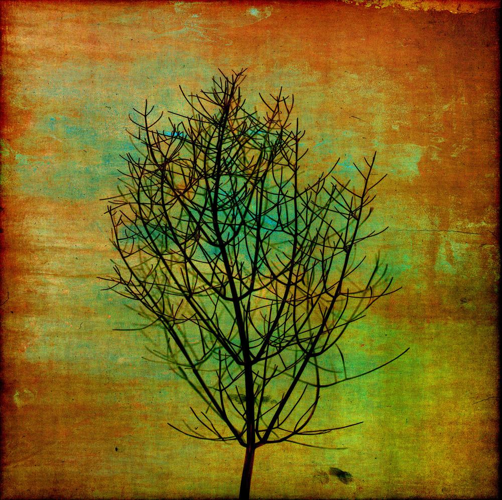 Flower0070e.jpg