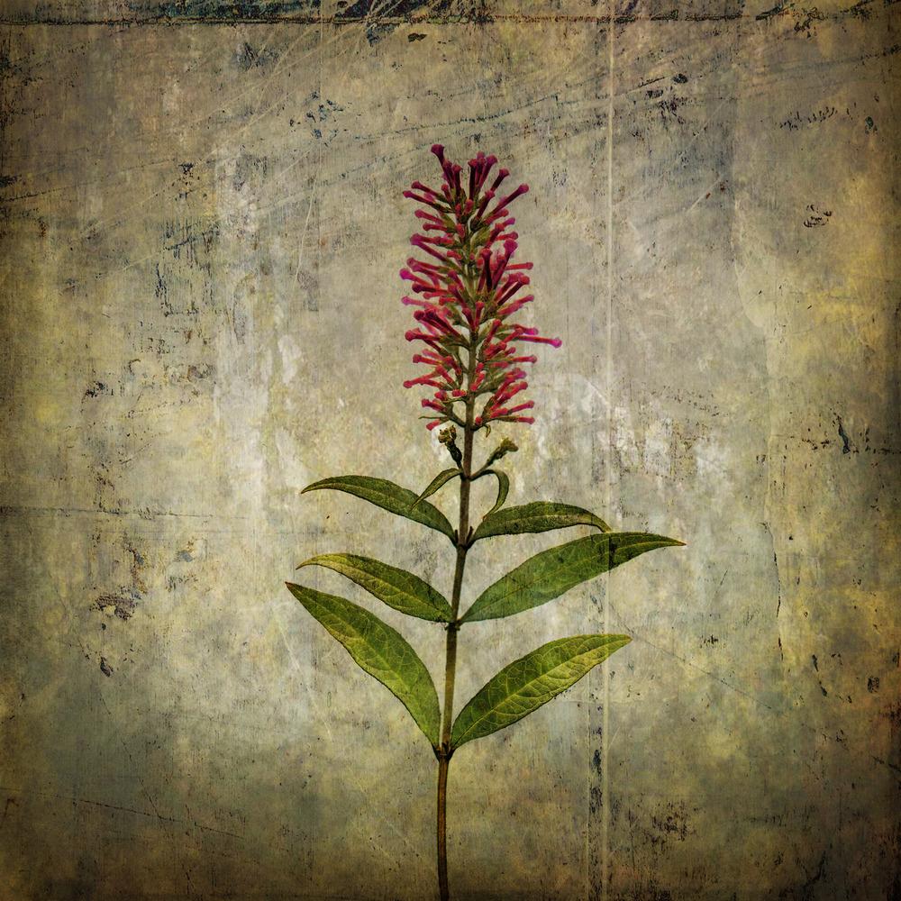 Flower0076c.jpg