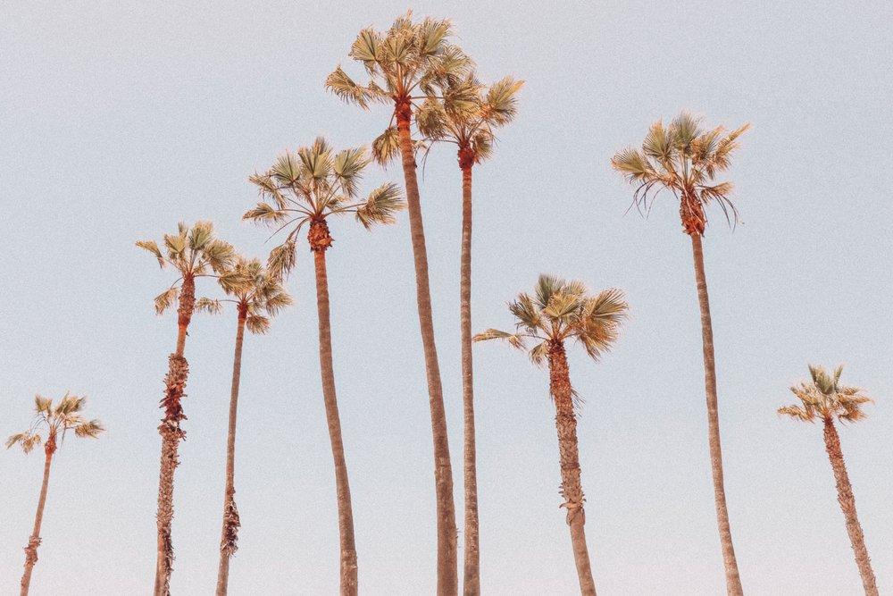 Los Angeles  (Photo by  Viviana Rishe )