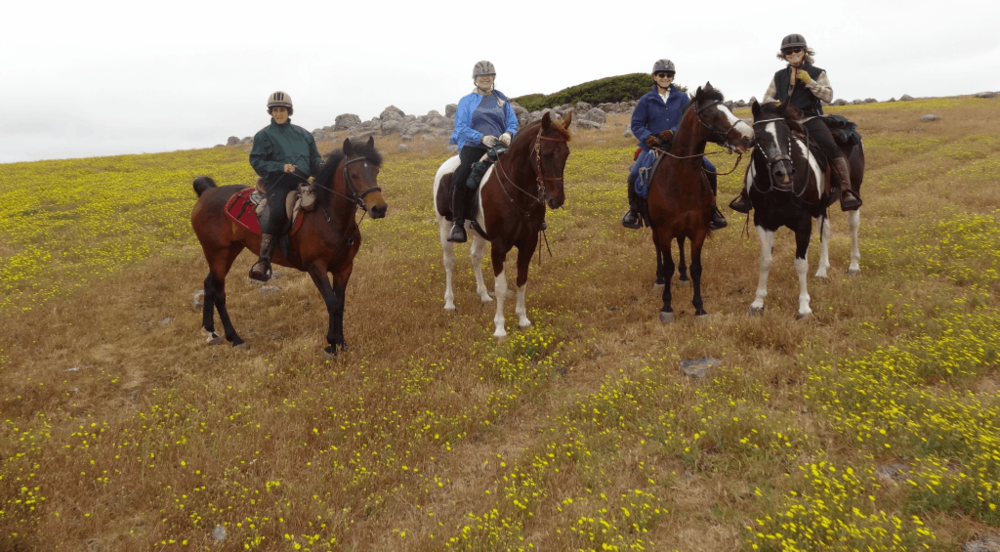 Wild Bunch Pt. Reyes June 2013 053.png