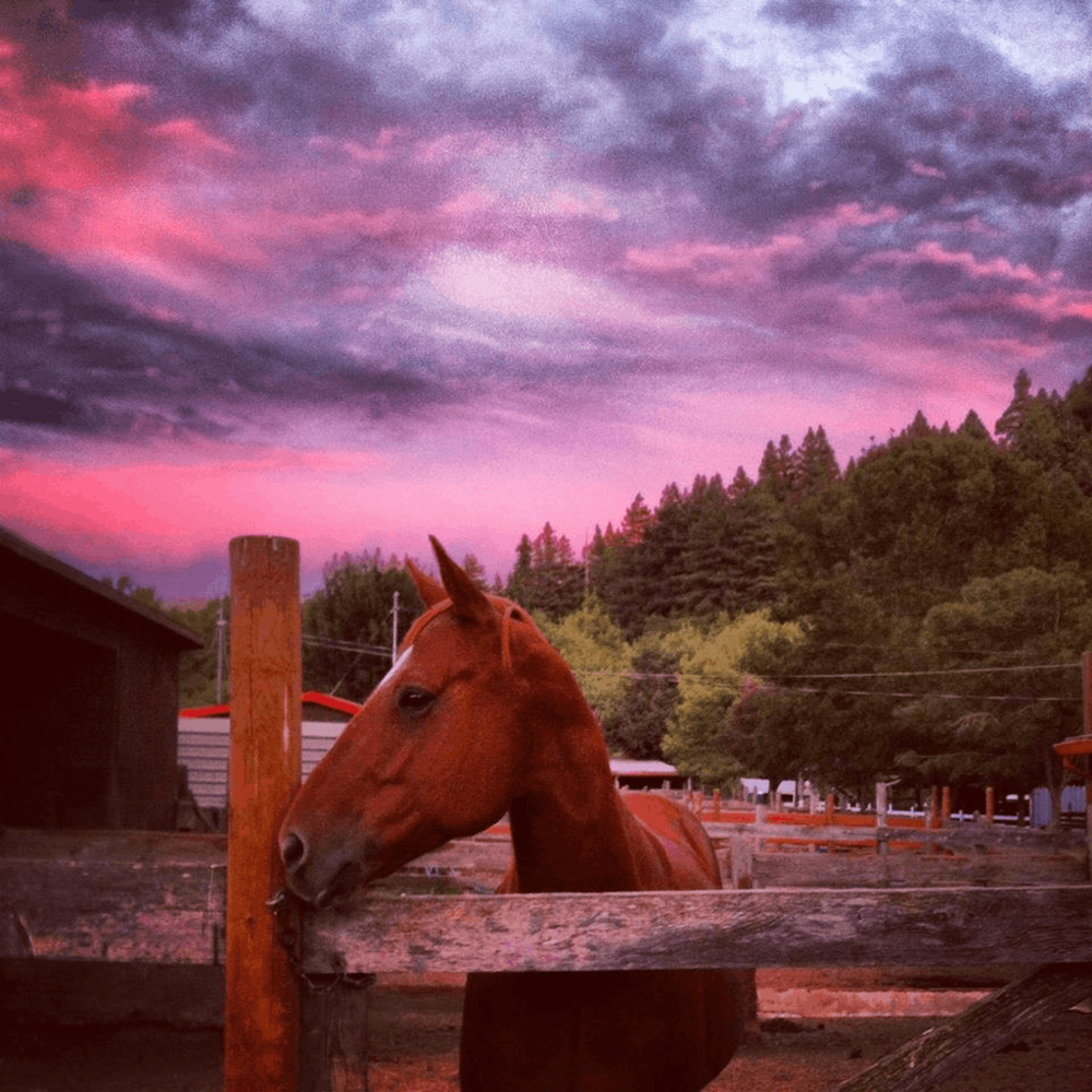 Spectacular Colors at Dickson Ranch. Photo by Honor Barone