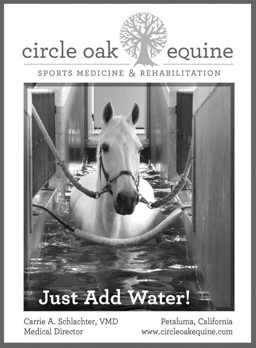 circle oak equine