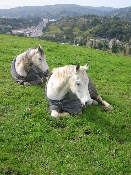 2 horses Hwy 101.jpg