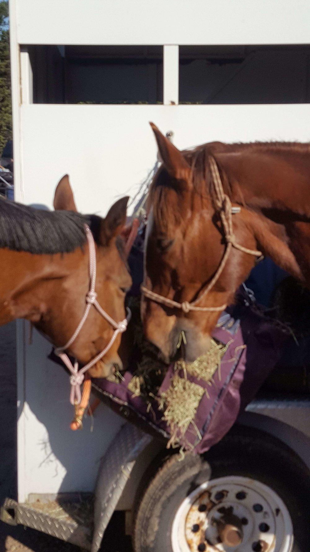 Horses sharing