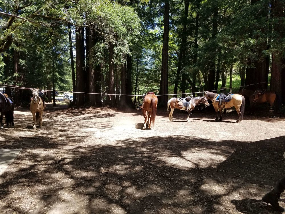 Marin Horses on a Break