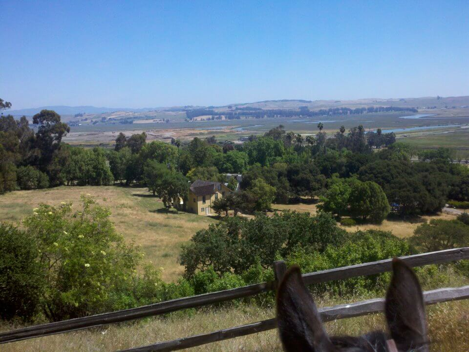 Olompali horse view.jpg
