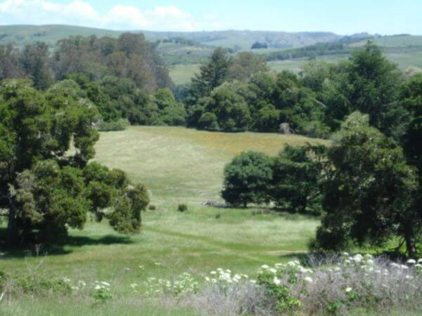 Vedanta retreat olema_hills Pt Reyes.jpg