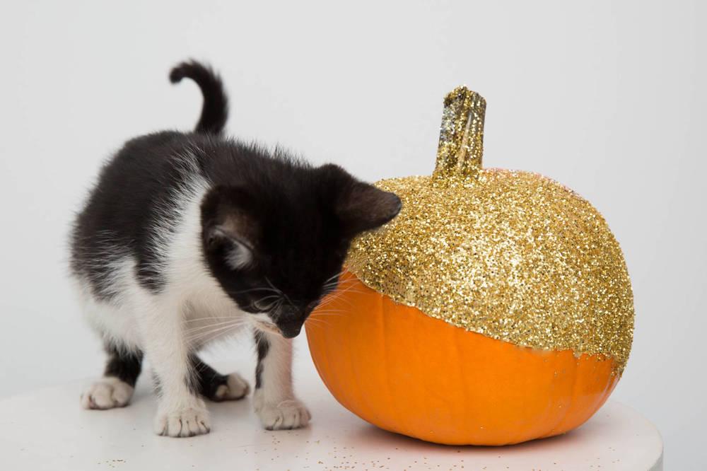 Kitty_Pumpkin.jpg