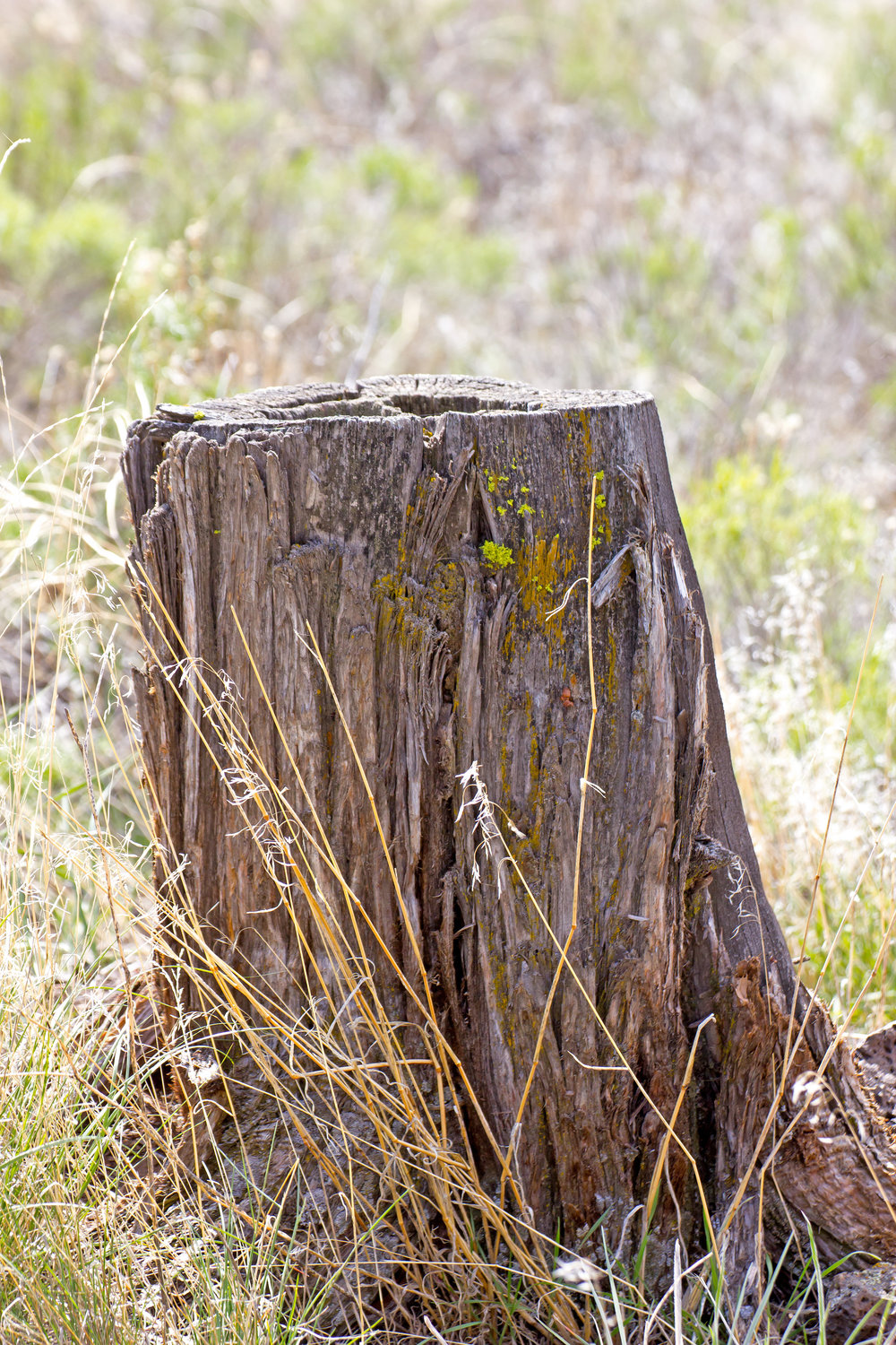 old-tree-stump_M1u2IDKu.jpg