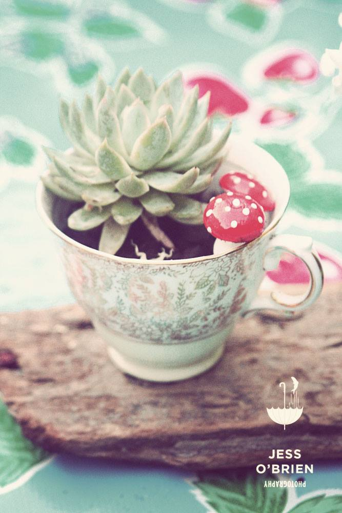 Teacup Terrariums