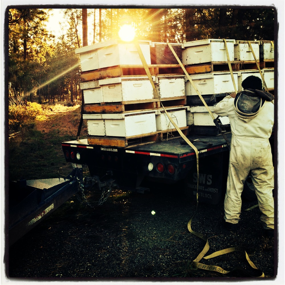 60,000 bee-utiful honey bees arrive at the farm...