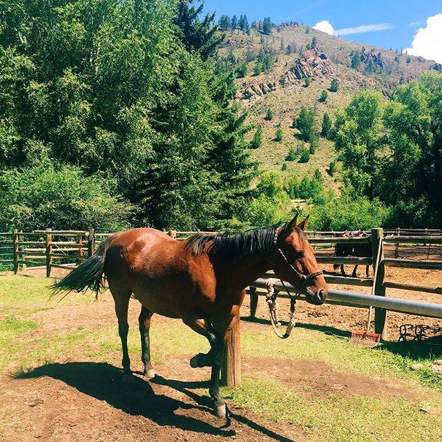 Say hello to Xena, my riding partner. So pretty and so so hungry. 🐴✨