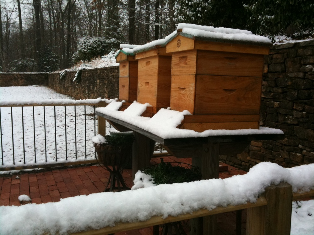 hive in winter image.jpg